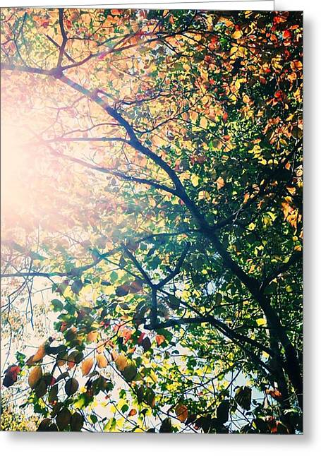 Greeting Card featuring the photograph Autumn Flame by Kim Fearheiley