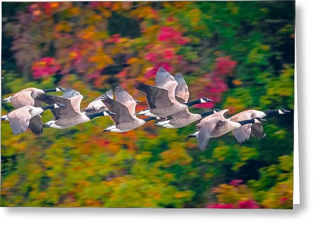Autumn Flight Greeting Card by Brian Stevens