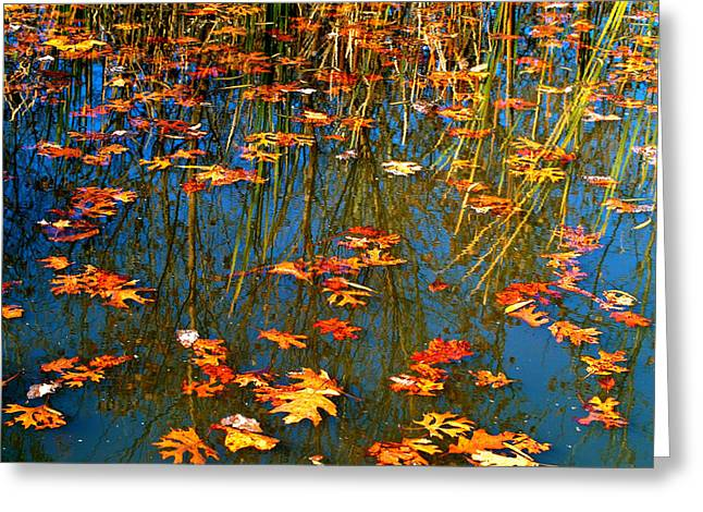Greeting Card featuring the photograph Autumn  Floating by Peggy Franz