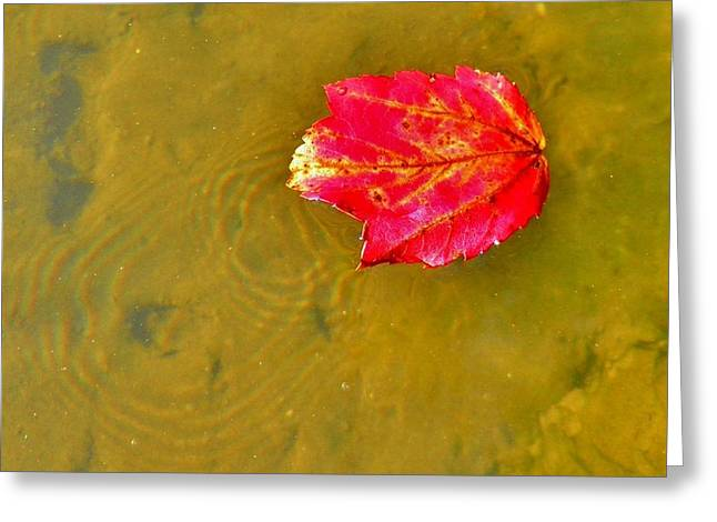 Autumn Floats Greeting Card