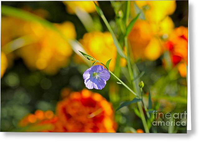 Autumn Flower Greeting Card by Jay Nodianos