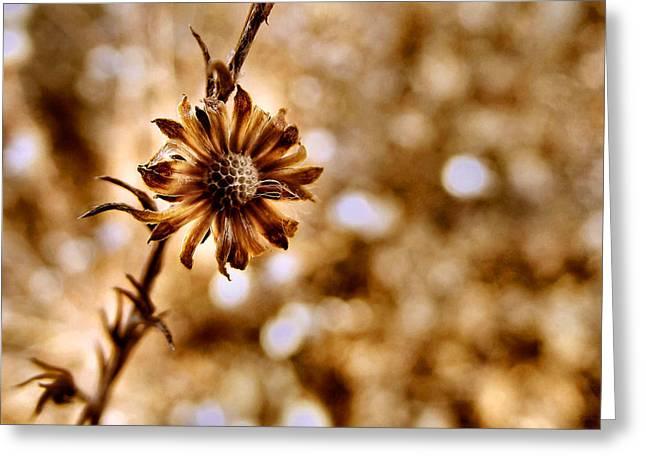 Autumn Flower Greeting Card