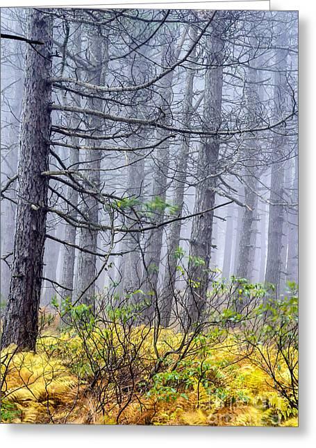 Autumn Fog Dolly Sods Wilderness Greeting Card by Thomas R Fletcher