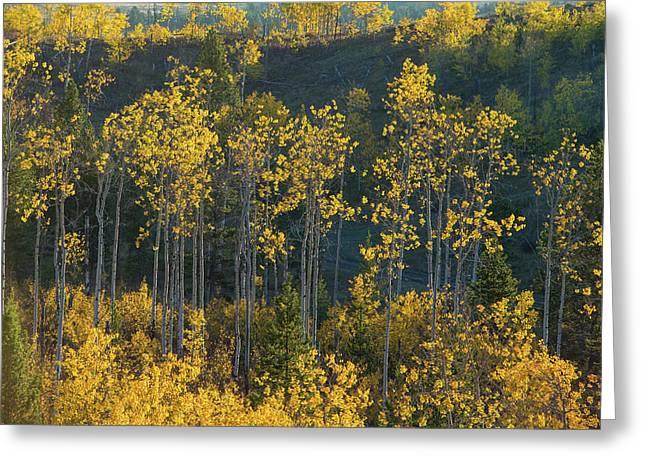 Autumn Foliage In Bridger Teton Greeting Card by Charlie James