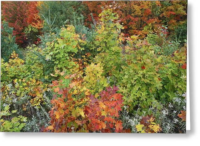 Autumn Foliage Killarney Provincial Park Greeting Card by Tim Fitzharris