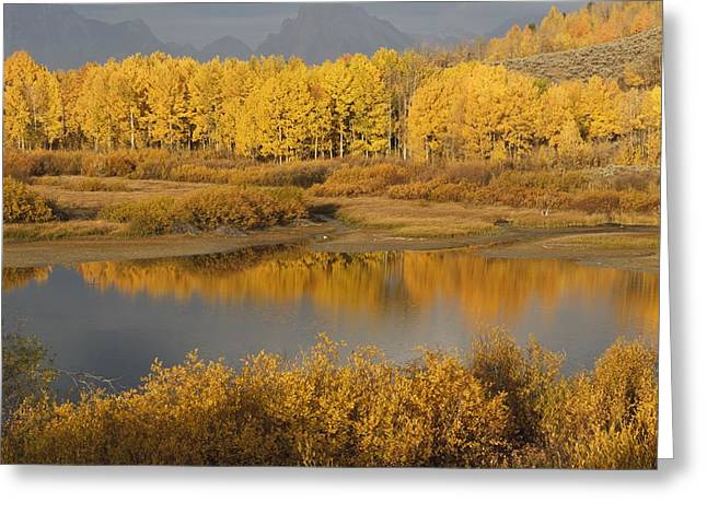 Autumn Foliage Surrounds A Pool In The Greeting Card by David Ponton