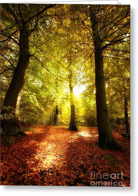 Autumn Forest Greeting Card by Boon Mee