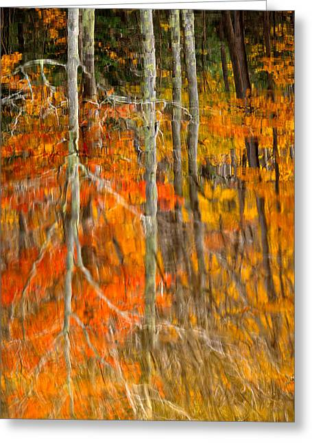 Autumn Forest Reflection Greeting Card by Jeff Sinon