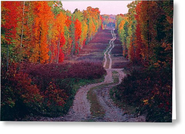 Autumn Forest Road Greeting Card