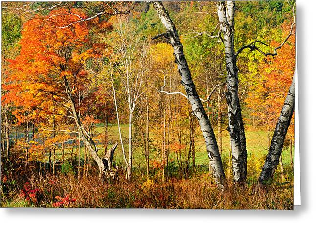 Autumn Forest Scene - Litchfield Hills Greeting Card by Thomas Schoeller