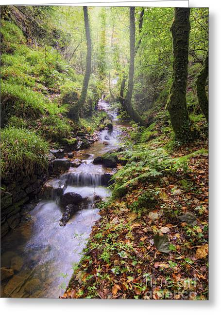 Autumn Forest Stream Greeting Card by Ian Mitchell