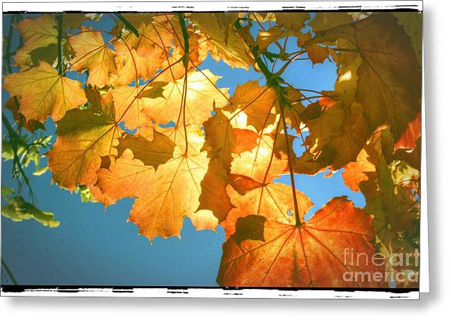 Autumn Found Greeting Card by Spikey Mouse Photography