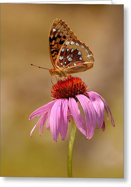 Autumn Fritillary Butterfly Greeting Card