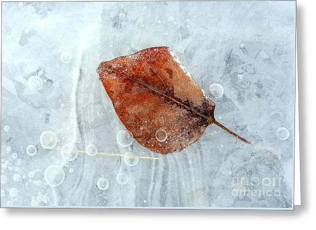 Autumn Frozen Greeting Card by Mike  Dawson