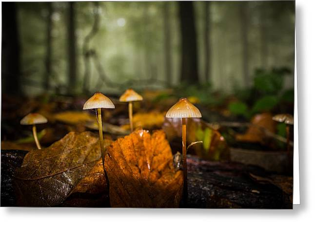 Autumn Fungus Greeting Card by Ian Hufton