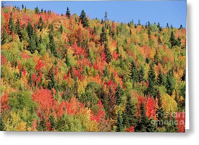 Autumn In Gaspesie Natl Park Quebec Greeting Card by Yva Momatiuk John Eastcott