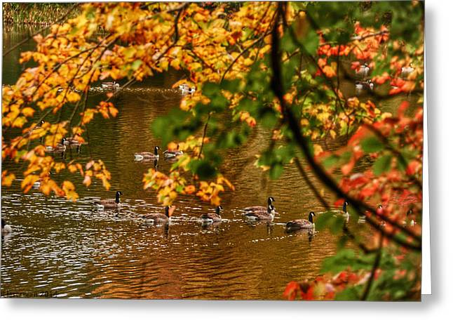 Autumn Geese Abstract Greeting Card by Kathi Isserman