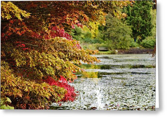 Greeting Card featuring the photograph Autumn Glory By The Pond by Maria Janicki