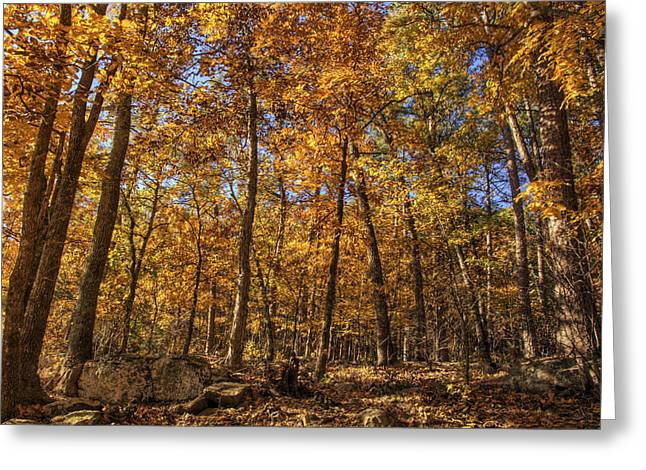 Autumn Gold - Fall - Trees Greeting Card by Jason Politte