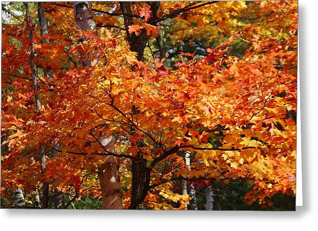 Autumn Gold Greeting Card by Pat Speirs
