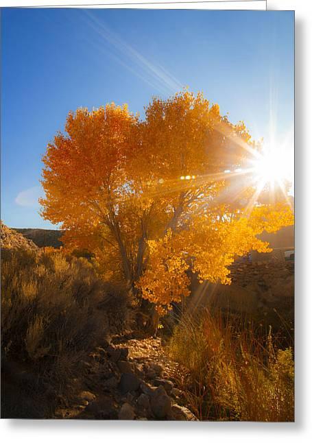 Autumn Golden Birch Tree In The Sun Fine Art Photograph Print Greeting Card