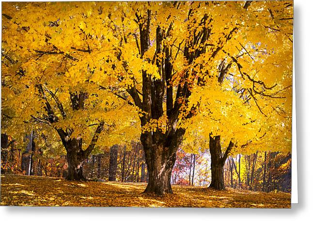 Autumn Golds Greeting Card by Debra and Dave Vanderlaan