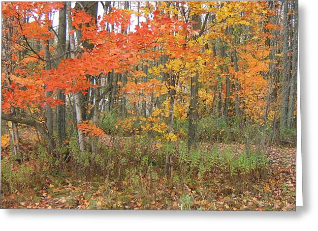 Autumn Golds Greeting Card by Margaret McDermott