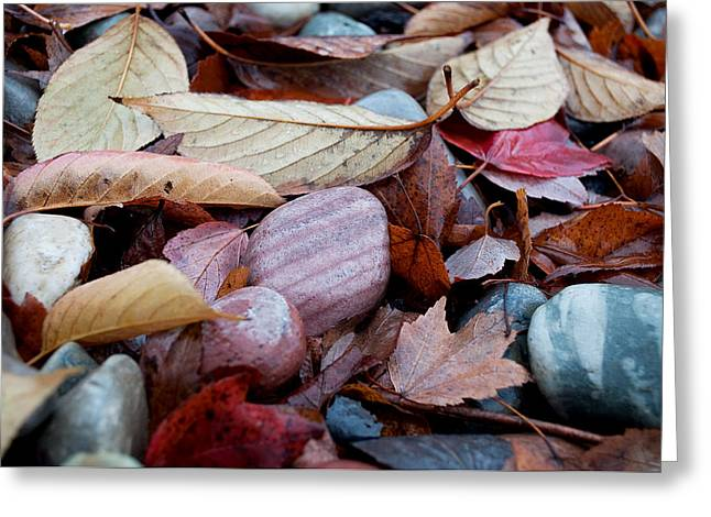 Greeting Card featuring the photograph Autumn Greatness by Gwyn Newcombe