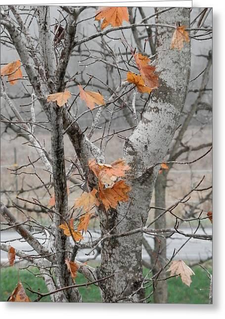Autumn Grey Greeting Card by Margaret McDermott