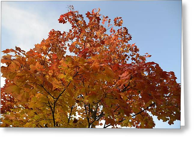 Autumn Harmony 1 Greeting Card