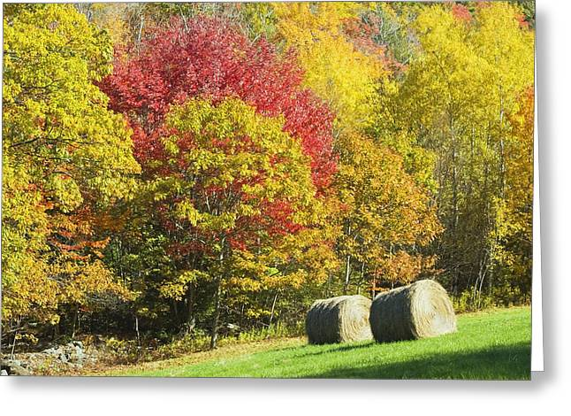 Yellow Leaves Greeting Cards - Autumn Hay Being Harvested In Maine Greeting Card by Keith Webber Jr