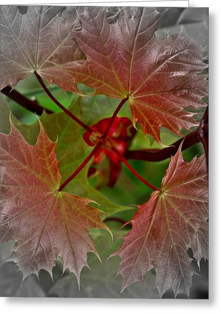 Autumn Greeting Card by Henry Kowalski