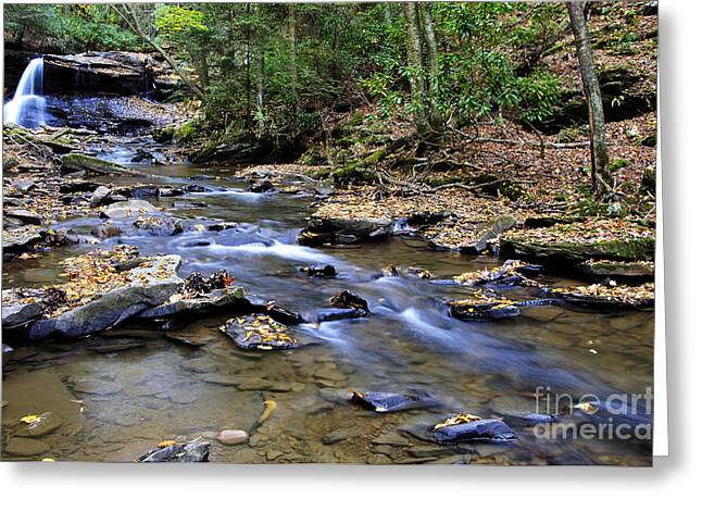Autumn Holly River State Park Greeting Card by Thomas R Fletcher