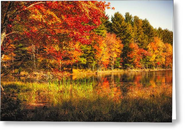 Autumn Hot Mess Greeting Card by Robert Clifford