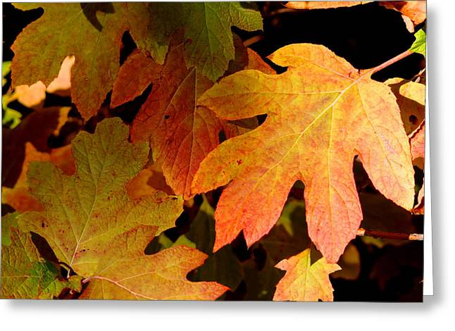 Autumn Hues Greeting Card