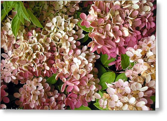Autumn Hydrangeas Greeting Card