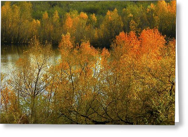 Autumn Ignites Greeting Card