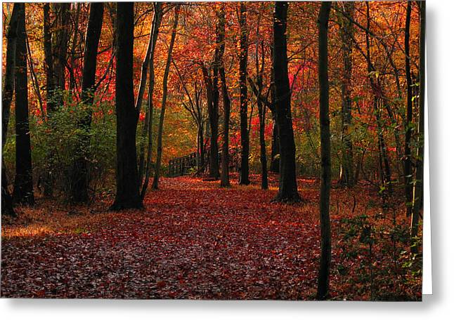 Greeting Card featuring the photograph Autumn IIi by Raymond Salani III
