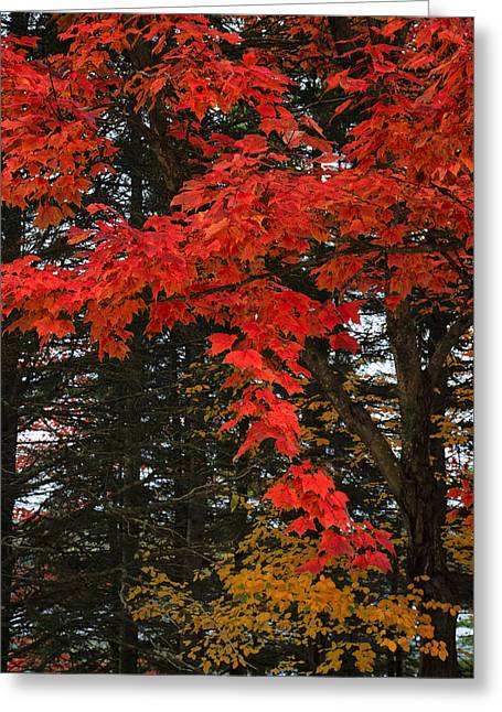 Autumn In Algonquin 3 Greeting Card by Gary Hall