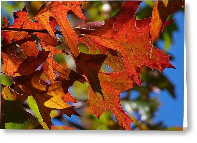 Autumn In Australia Greeting Card by Margaret Saheed