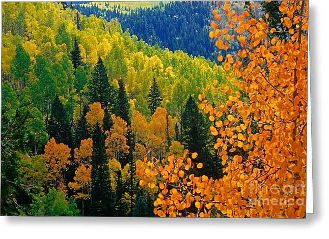 Autumn In Colorado Greeting Card by Richard and Ellen Thane