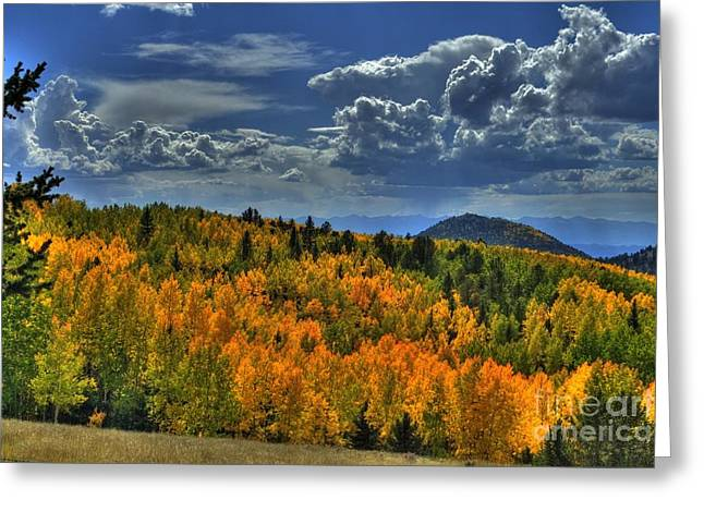 Autumn In Colorado Greeting Card