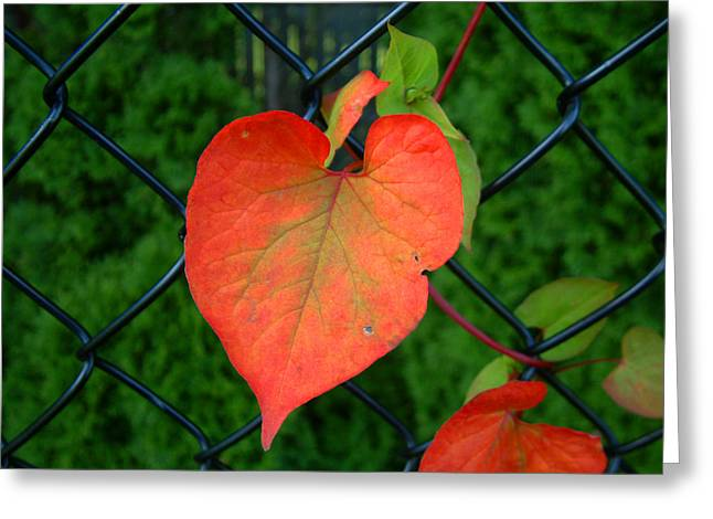 Autumn In July Greeting Card by RC deWinter