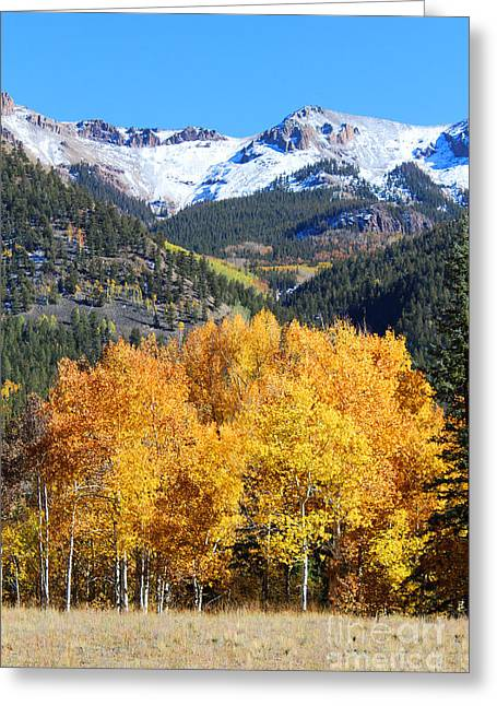 Autumn In Lake City Greeting Card