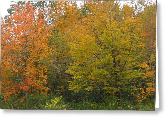 Autumn In Maine Greeting Card by Patricia E Sundik