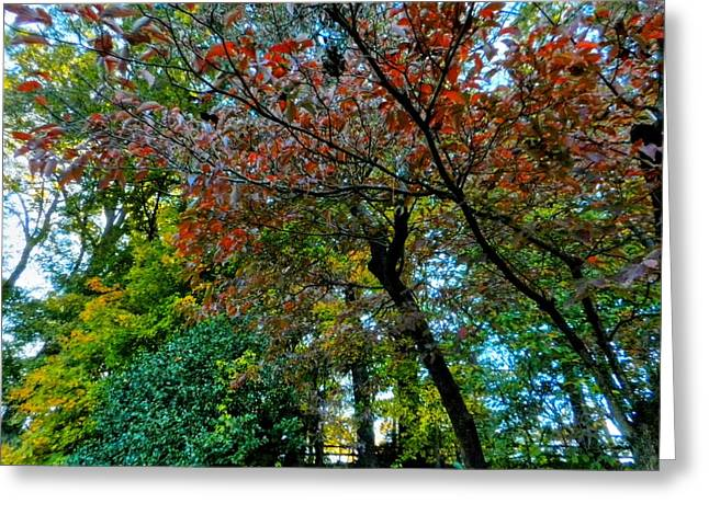 Autumn In Raleigh 009 Greeting Card by Lance Vaughn
