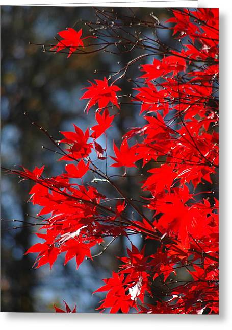 Autumn In Red Greeting Card by Les Scarborough