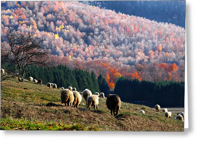 Autumn In Romanian Mountains Greeting Card