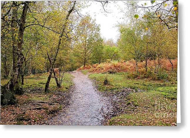 Autumn In Sutton Park 2 Greeting Card