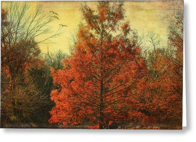 Autumn In Texas Greeting Card